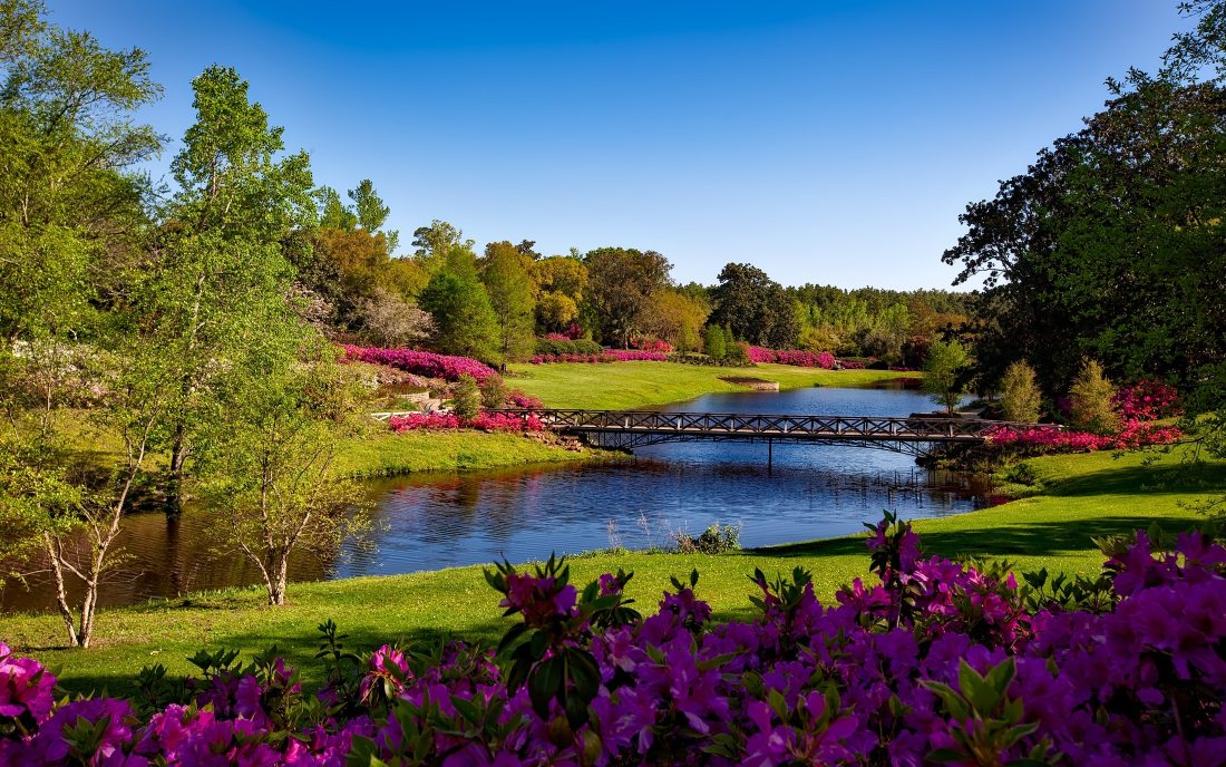 bridge-flowers-grass-158063